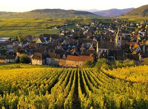 A vineyard in beautiful Alsace.