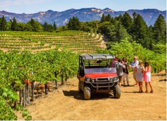 All Terrain Vineyard Experience